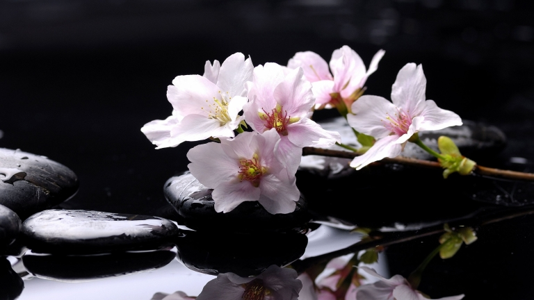 flower-Magnolia-reflection-stones-water-zen