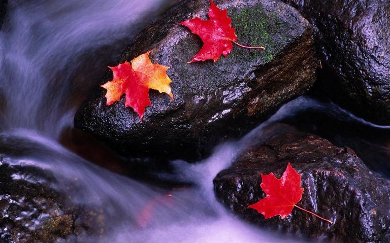 hd-herfst-wallpaper-met-herfstbladeren-op-rotsen-en-water-herfst-achtergrond