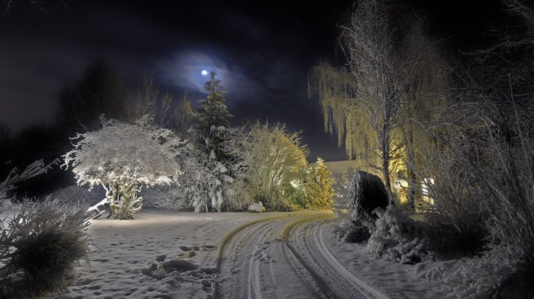 light-nature-snow-trees-night-Moon-_34770-45