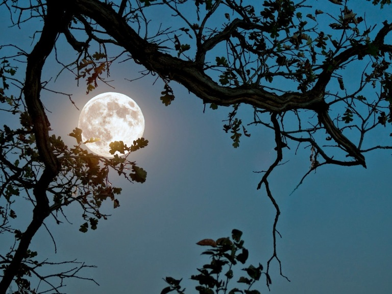 Moonlight-photography-view-of-moon-between-tree-leaves
