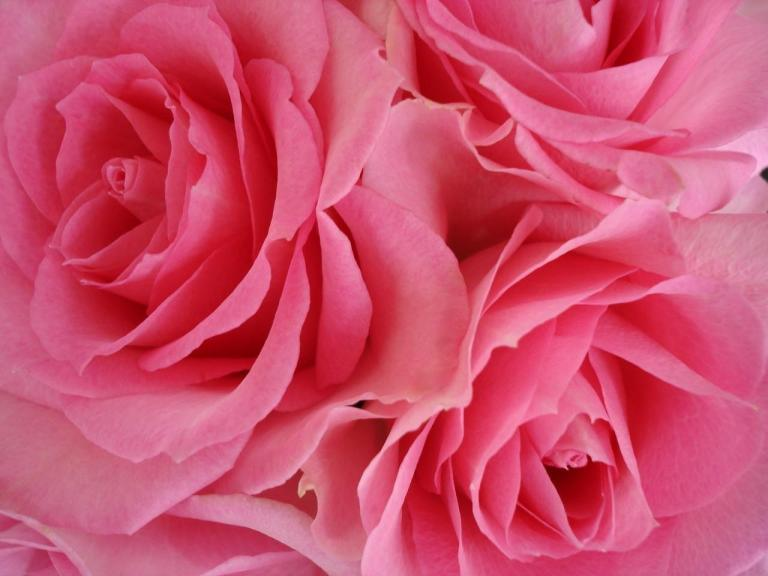 paint_my_wall_pink-780488