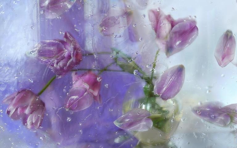 rainy_day-1534986