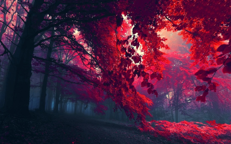red-fall-leaves-wallpaper-full-hd-1p002