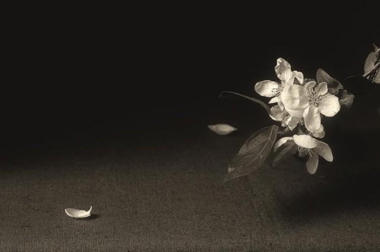 simply-white-187912