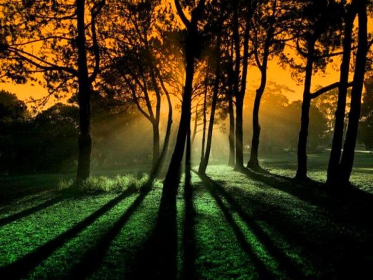 sunset_shadows_trees_soft_light_gold_sky_hd-wallpaper-660268