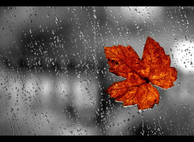 window_leaf_rain_autumn_abstract_hd-wallpaper-1614759