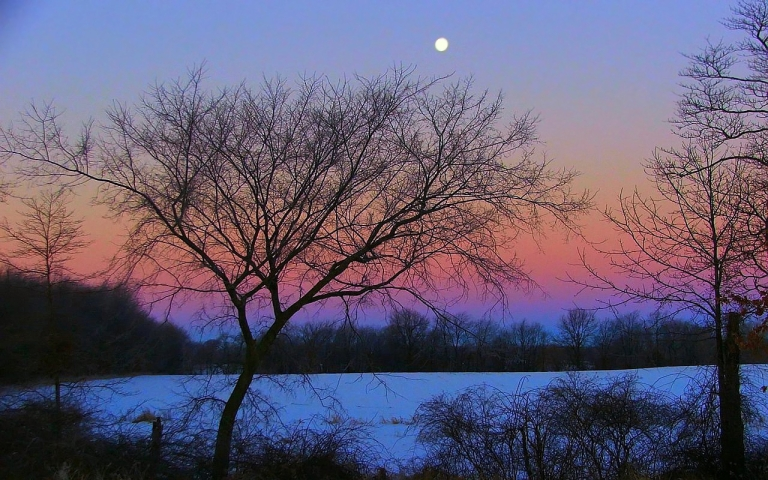 winter_moon_rising_by_revcb