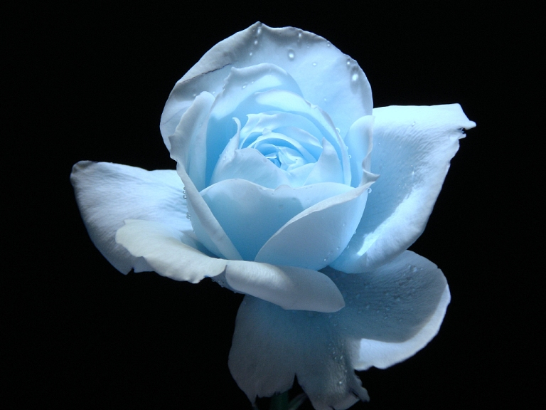 5. Light Blue Flowers Wallpapers