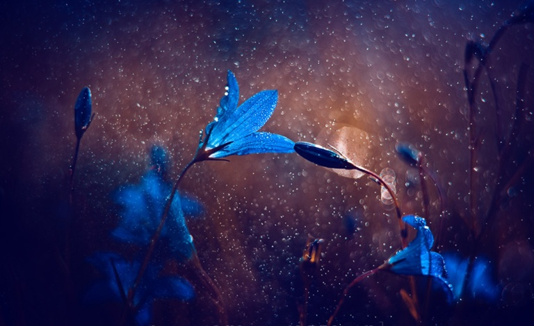bells_flower_blue_rain_nature_hd-wallpaper-1571799