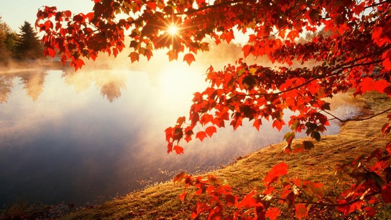 red-fall-leaves-wallpaper-fshwq
