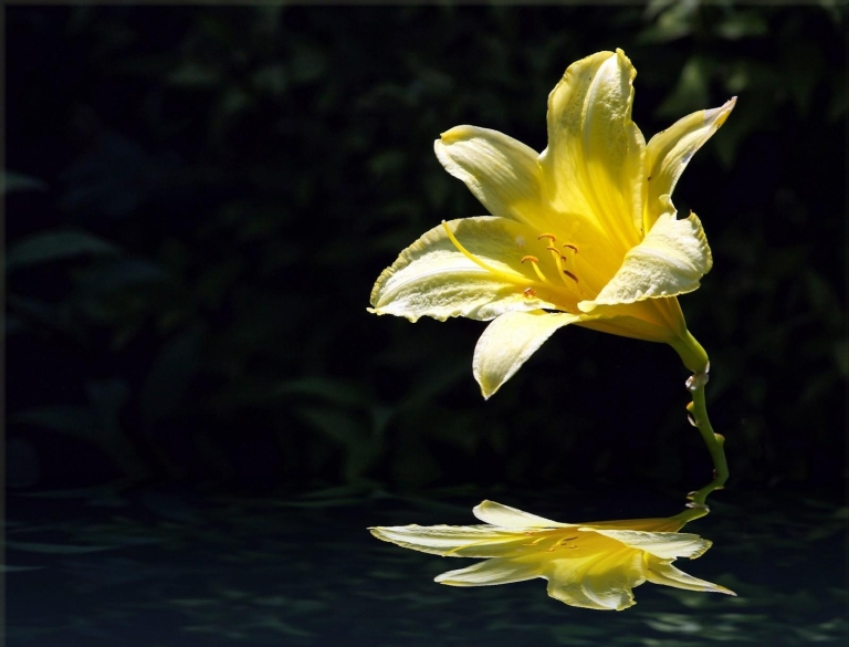 7024351-flower-over-water-pictures