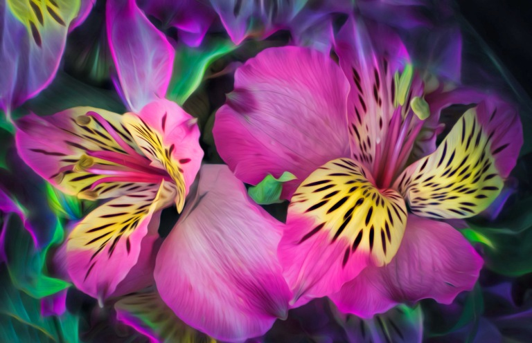 beautiful_awakening_leaves_petals_colors_hd-wallpaper-1918532