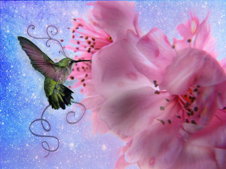 Most-Beautiful-Hummingbird-Wallpaper
