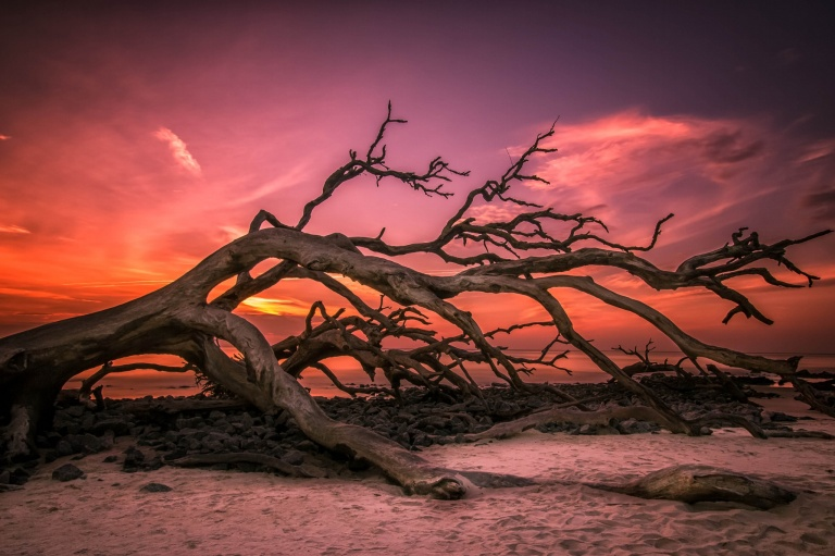 weathered_tree_nature_sky_branch_hd-wallpaper-1917894
