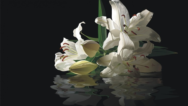 white-lilies-reflection-with-black-background-1920x1080