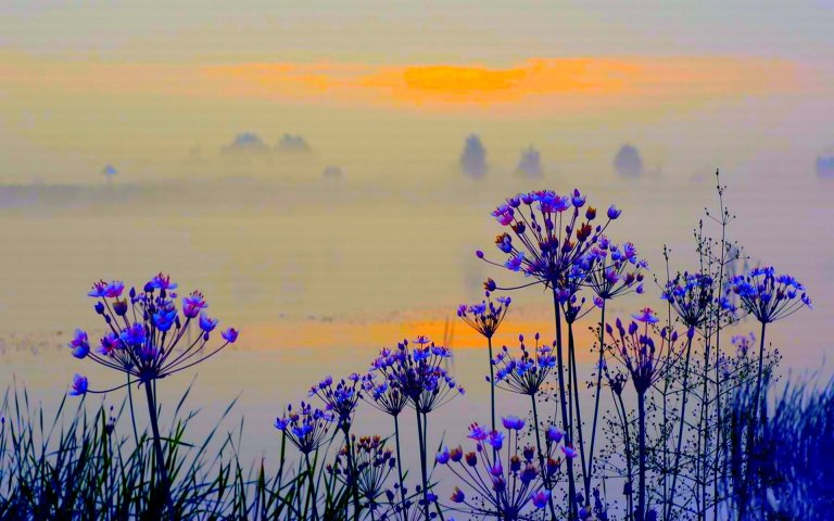 wild_flowers_in_the_morning_mist_beautiful_hd-wallpaper-1843878