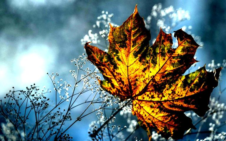 autumn_leaf_art_sky_abstract_high_contrast_hd-wallpaper-1733763