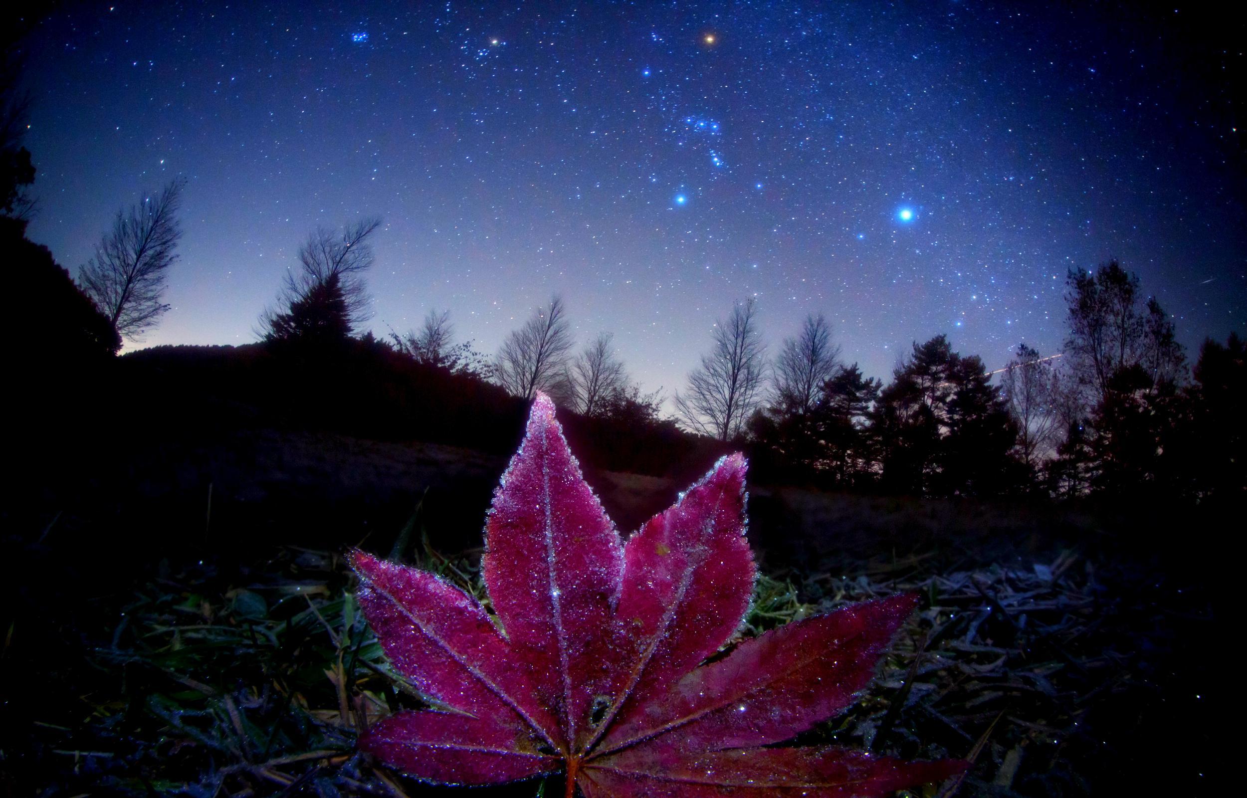 starry_sky_autumn_leaf_night_nature_hd-wallpaper-1558950