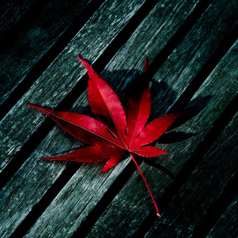 Red-Leaf-ipad-4-wallpaper-ilikewallpaper_com