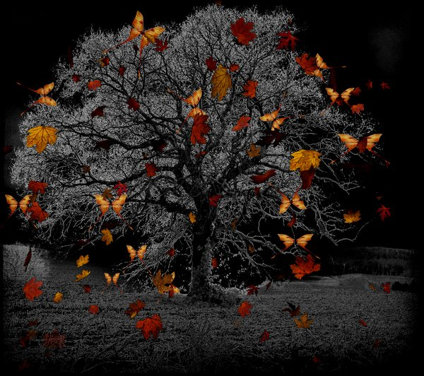 "Image:  ""Night Autumn"" ©2009-2016 hearthyhttp://hearthy.deviantart.com/art/Night-autumn-127230185"