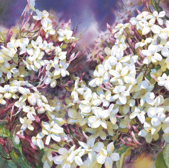 Image:  Darryl Trott Artwork - Climbing Jasminehttp://originpublishing.com.au/artists/darryl-trott/climbing-jasmine/