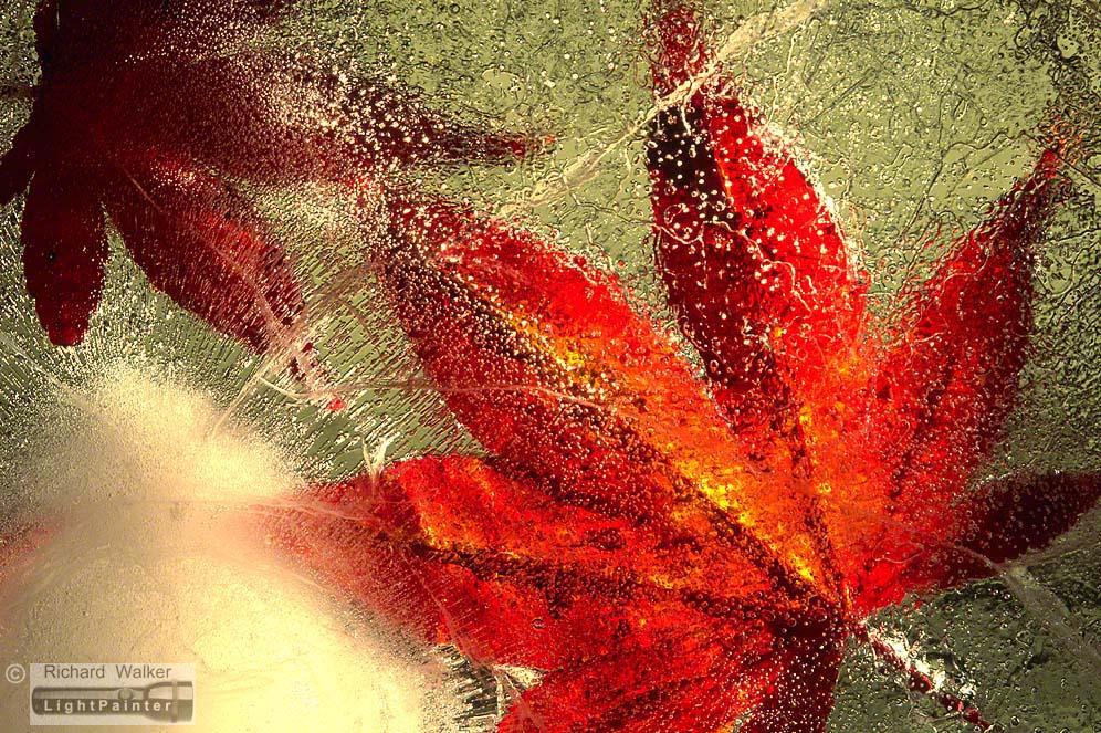 Image by Richard Walker - Lightpainter - Autumn Leaf In Ice #2 richardwalkerimages.com